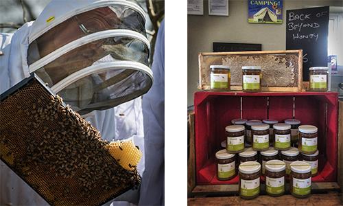 BeesHoney 2 pics