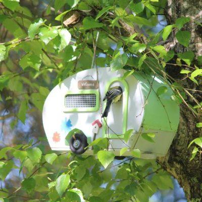 Visitor-pic-bird-caravan