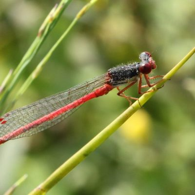 Visitor-pic-dragon-fly