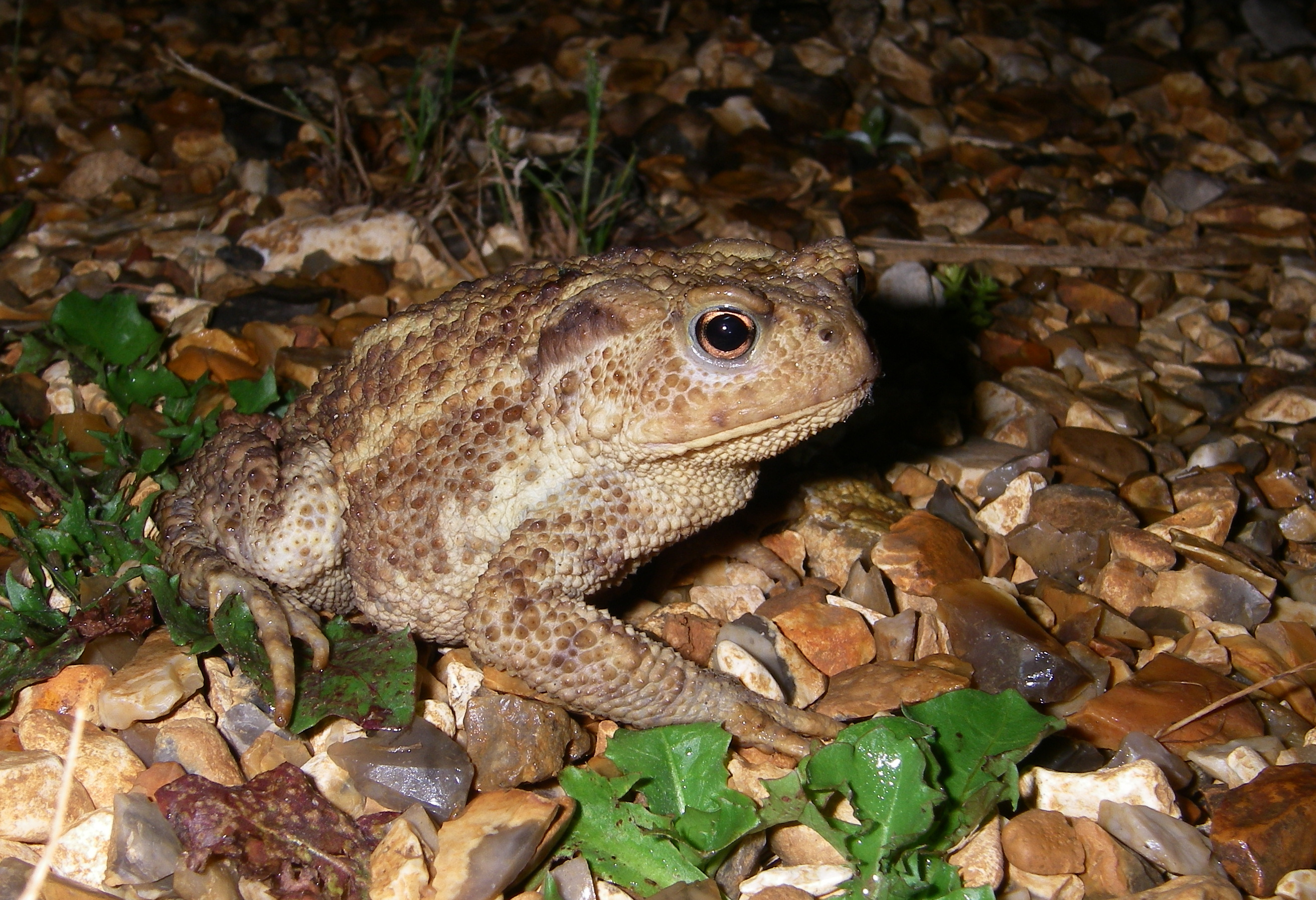 Visitor-pic-toad