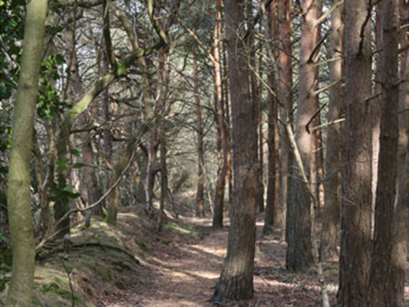 Woodlands, lakes and conservation