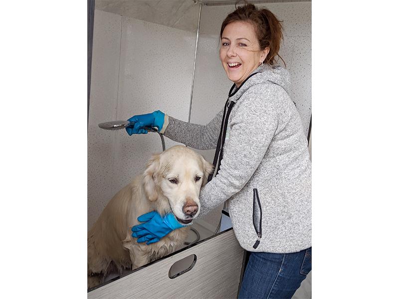 Warm water Dog Wash